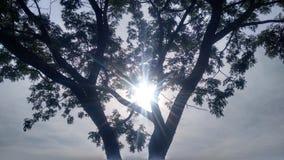 Sunny morning stock photo