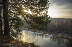 Sunny morning in the river in the forest. Dawn on the river bank. Autumn morning Royalty Free Stock Images