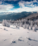 Sunny morning scene in the winter mountain. Instagram toning Royalty Free Stock Photography