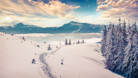 Sunny morning scene in the winter mountain. Sunne morning scene in the winter mountain. Instagram toning Stock Photography