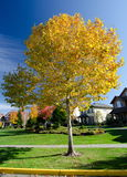 Sunny morning in Seattle suburb during fall season Stock Photography