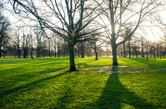 A Sunny morning in spring Park. Sunny morning in the Park in the spring with the shadows of the trees on the green grass stock photo