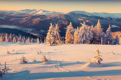 Sunny morning sunrise in the winter mountain Royalty Free Stock Image