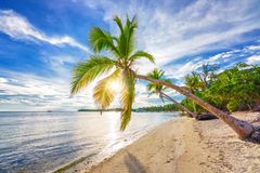 Sunny morning on tropical beach stock image