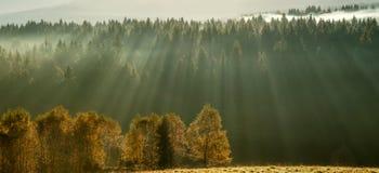 Sunny Morning Royalty Free Stock Photo