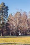 Sunny morning winter park landscape. Sunny autumn park landscape with aphyllous birch Stock Photo