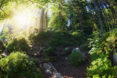 Sunny morning woodland. Sunny morning in green summer woodland stock photography