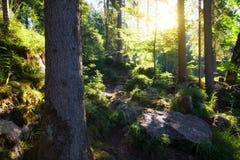 Sunny morning woodland. Sunny morning green summer woodland stock photography