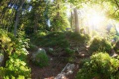 Sunny morning woodland. Sunny morning green summer woodland stock photos