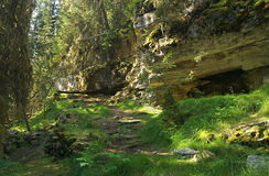 Sunny mountain glade. A grassy, sun dappled glade in the Rocky mountains in summer royalty free stock photo