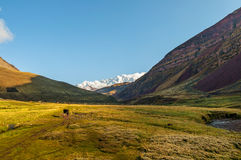 Sunny mountain valley with snow-capped peaks on the horizon Royalty Free Stock Photography