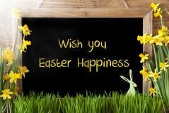 Sunny Narcissus, coelho, desejo do texto você felicidade da Páscoa foto de stock