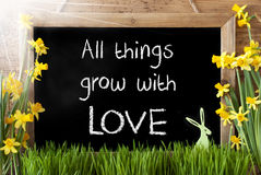 Sunny Narcissus, Easter Bunny, Quote All Things Grow With Love Stock Photos