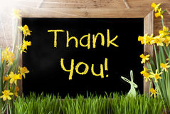 Sunny Narcissus, Easter Bunny, Yellow Text Thank You Royalty Free Stock Photo