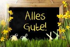 Sunny Narcissus, Easter Egg, Bunny, Alles Gute Means Best Wishes Stock Photography