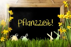 Sunny Narcissus, Easter Egg, Bunny, Pflanzzeit Means Planting Season. Blackboard With German Text Pflanzzeit Means Planting Season. Sunny Spring Flowers Nacissus Stock Images