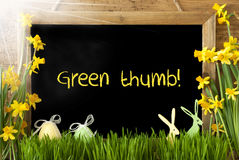 Sunny Narcissus, Easter Egg, Bunny, Text Green Thumb Stock Photography