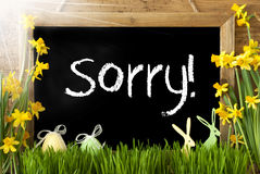 Sunny Narcissus, Easter Egg, Bunny, Text Sorry Stock Photos