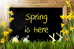 Free Sunny Narcissus, Easter Egg, Bunny, Text Spring Is Here Stock Photography - 108418412