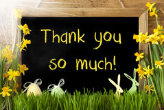 Sunny Narcissus, Easter Egg, Bunny, Text Thank You So Much Stock Image