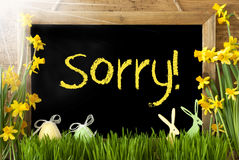 Sunny Narcissus, Easter Egg, Bunny, Yellow Text Sorry Stock Photos