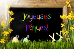Sunny Narcissus, Ei, Konijntje, de Kleurrijke Middelen Gelukkige Pasen van Joyeuses Paques Stock Afbeeldingen