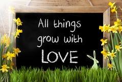 Sunny Narcissus, lapin de Pâques, citent toutes les choses se développent avec amour Photos stock