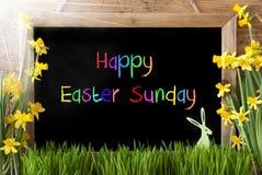 Sunny Narcissus, lapin, dimanche de Pâques heureux des textes colorés photographie stock