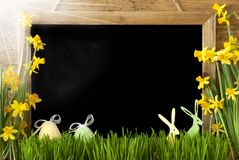 Sunny Narcissus, oeuf de pâques, lapin, l'espace de copie Photo stock