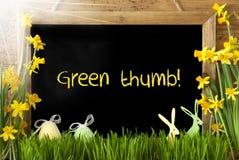 Sunny Narcissus, oeuf de pâques, lapin, textotent le pouce vert Photographie stock