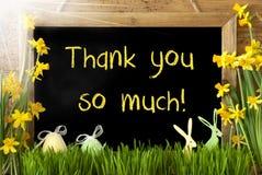 Sunny Narcissus påskägget, kaninen, text tackar dig så mycket Fotografering för Bildbyråer
