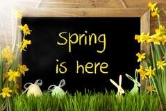 Sunny Narcissus påskägget, kaninen, textvår är här arkivbild