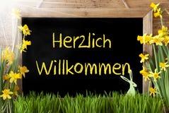 Sunny Narcissus påskkaninen, Herzlich Willkommen betyder välkomnande royaltyfria foton