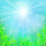Sunny natural background with maple leaves. Blurred soft backdrop royalty free illustration