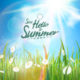 Sunny natural background with sun and grass. Royalty Free Stock Photo