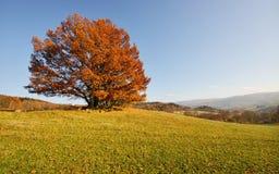 Sunny November. Sunny pasture with oak trees in November, Czech Republic stock image