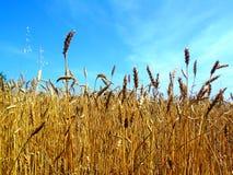 Sunny oat Stock Photography