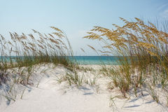 Sunny Ocean Beach Dunes with Sea Oats. View through sparkling white sand dunes and mature golden sea oats to the blue green ocean. Beach scene at the Gulf of Stock Photo