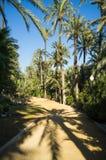 Sunny palm garden Stock Image