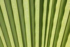 Sunny palm leaf Royalty Free Stock Photos