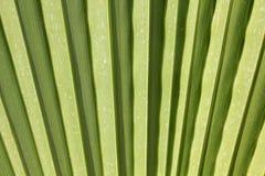 Sunny palm leaf Royalty Free Stock Photos