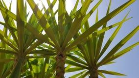Sunny palm. Summer tropical palm Stock Photos
