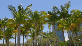Sunny palm tops panorama from miami downtown 4k florida usa stock video