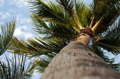 Sunny Palm Tree Royalty Free Stock Photo