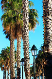 Sunny Palm Trees and Lamp Posts Royalty Free Stock Photos