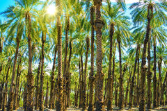Sunny Palms Plantation Photo stock