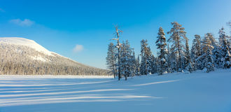 Sunny Panoramic Landscape of Northern Winter Nature Stock Photo