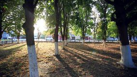 Sunny park afternoon. Sun's rays shine through the. Trees. HD. 1920x1080 stock footage