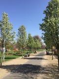 Sunny park Royalty Free Stock Image