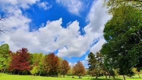 Sunny park stock photography
